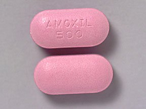The Go-To Drug for Bacterial Infection, Amoxicillin is an antibiotic