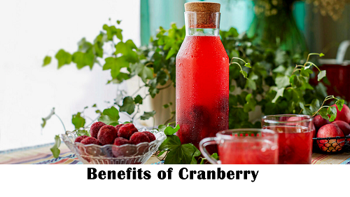 Cranberry is a medicinal fruit rich in Vitamin C and antioxidants by Anzen Exports