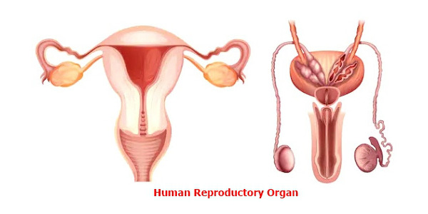 Reproductive health implies the wellbeing of the reproductive system