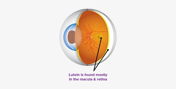 "Lutein is ""the eye vitamin"" and a carotenoid pigment"