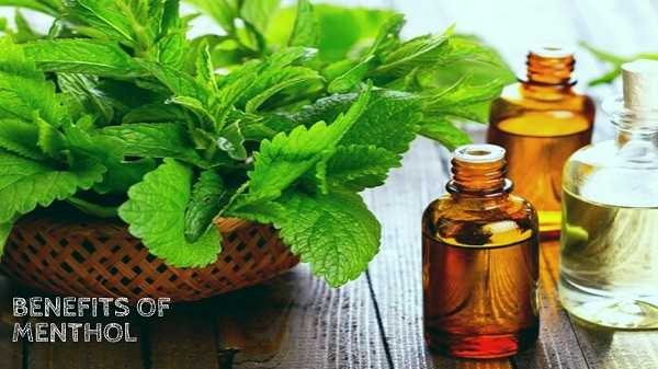 What is Menthol & its Various Uses?