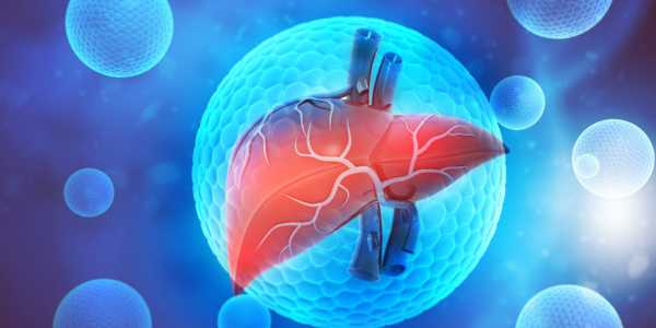 Treat chronic liver diseases with 'Silymarin'